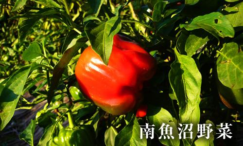 南魚沼産の野菜