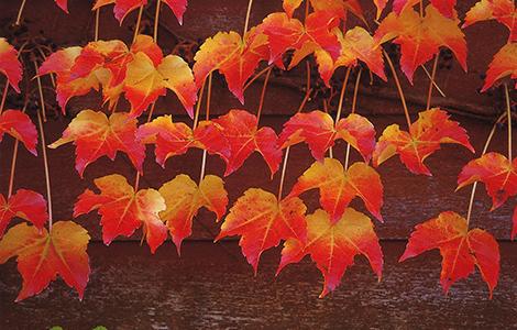 六日町の『秋』