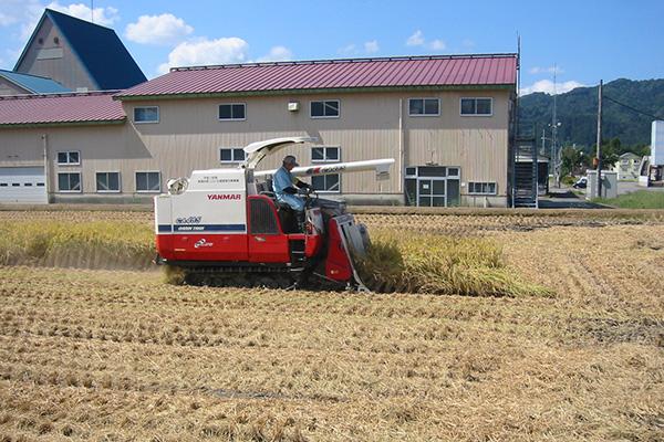 田植えから稲刈りまで